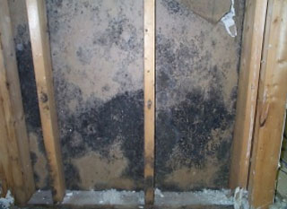 How to remove mold from wood image